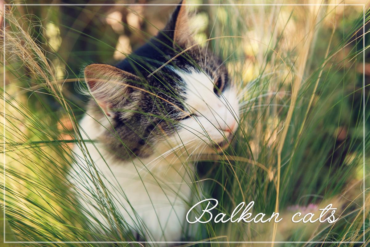 Mačke na Balkanu