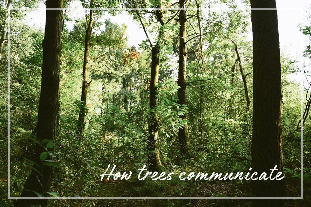 Kako drevesa komunicirajo