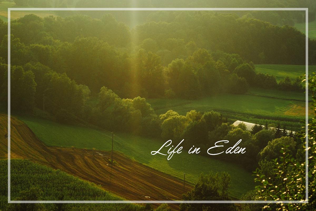 Življenje v raju